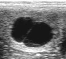 trächtigkeitsuntersuchung pferd ultraschall
